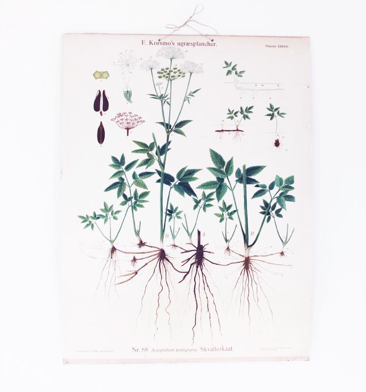 skolplansch växter