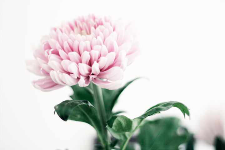 blommor emmas vintage
