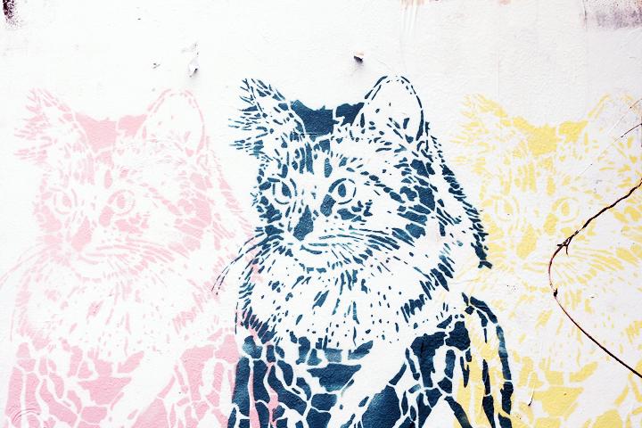 cat berlin