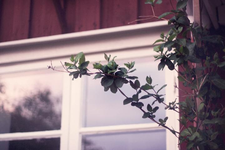 fönster by emmas vintage