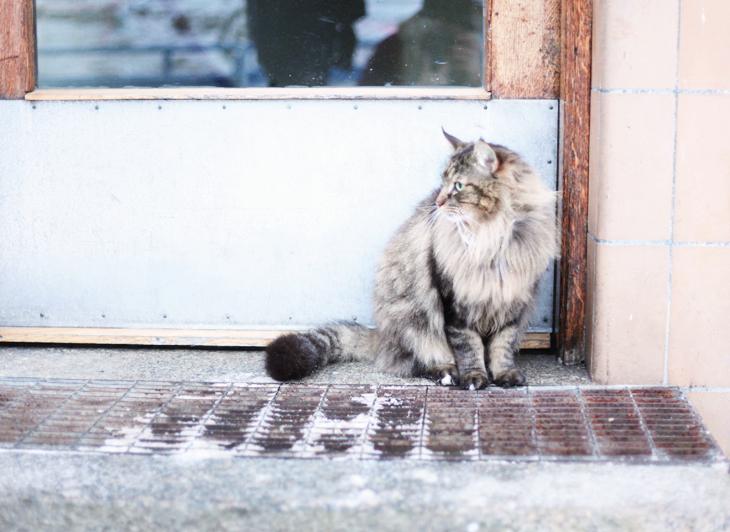 cat by emmas vintage