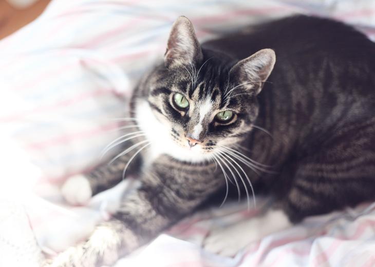 katt sockan by emmas vintage