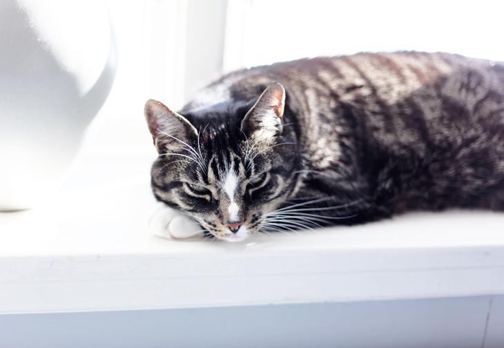 sockan katt by emmas vintage