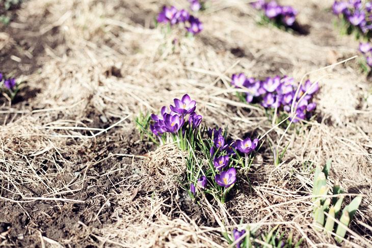 vår blommor by emmas vintage