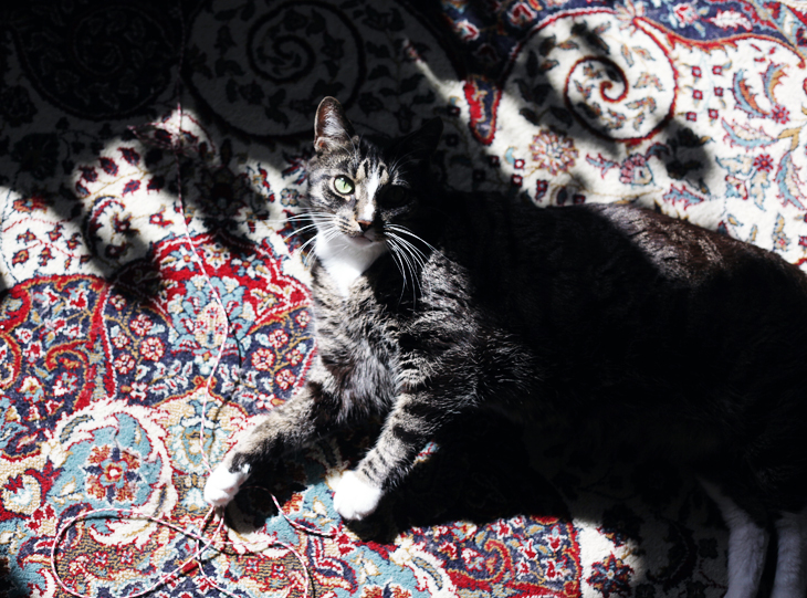 katt by emmas vintage