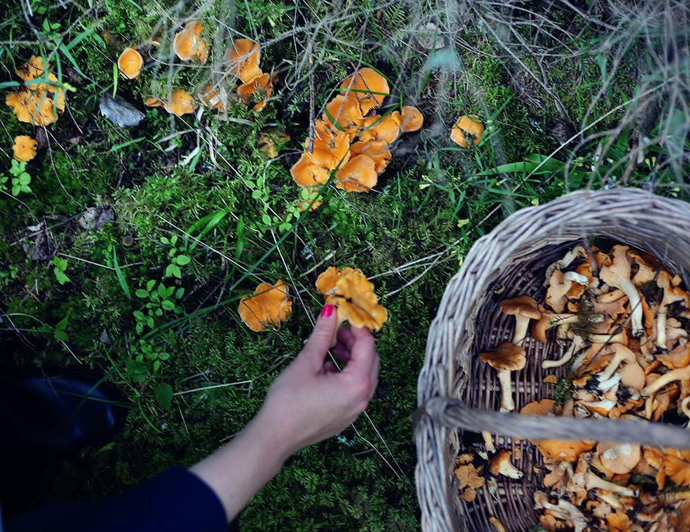 svamp kantareller svampplockning korg värmland emmasvintage