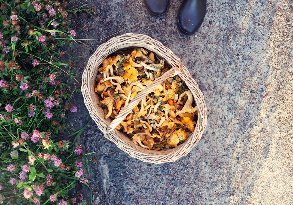 kantareller svamp korg svampkorg Värmland