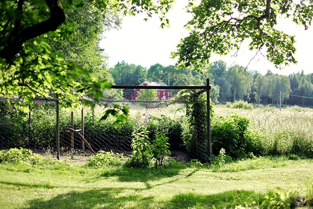 Värmland hönsgård höns