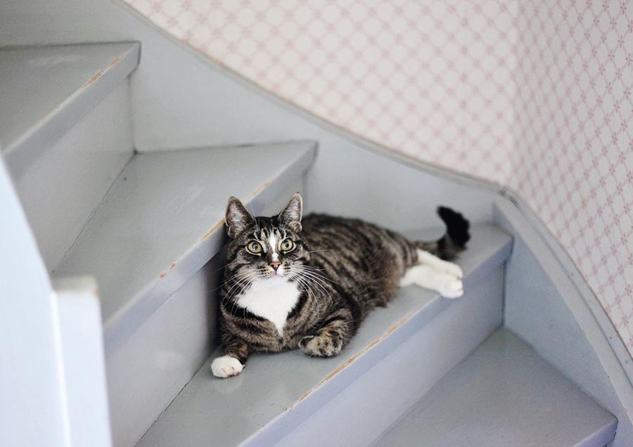 värmland katt