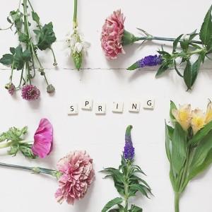 blommor flowers spring