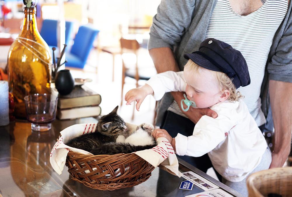 lyckliga gården gotland vintage antik loppis kattungar