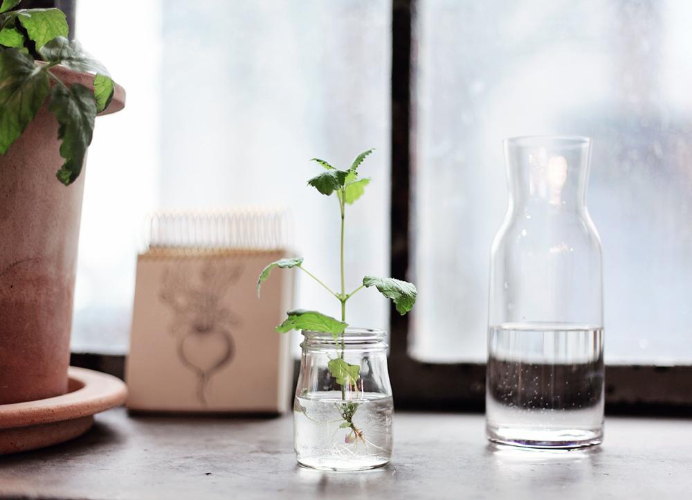 plantagen trädgård växter blommor odla inspiration kruka krukor vas
