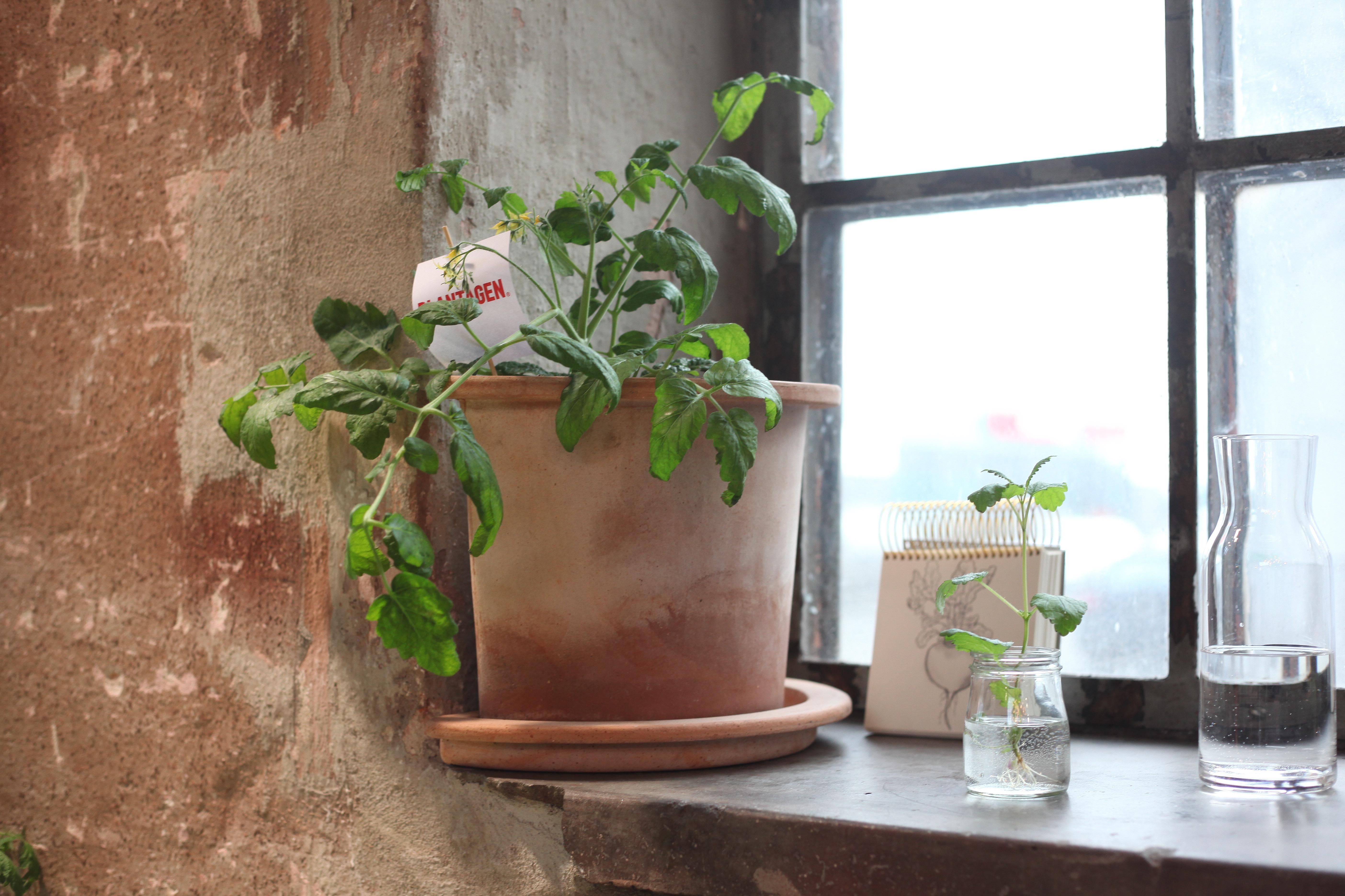 plantagen trädgård växter blommor odla inspiration kruka krukor