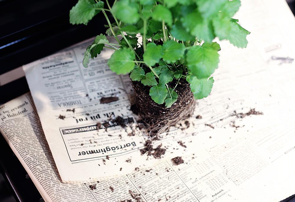 plantagen trädgård växter blommor odla inspiration kryddor
