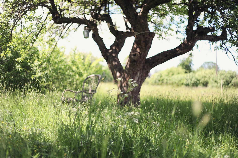 Gotland torp trädgård