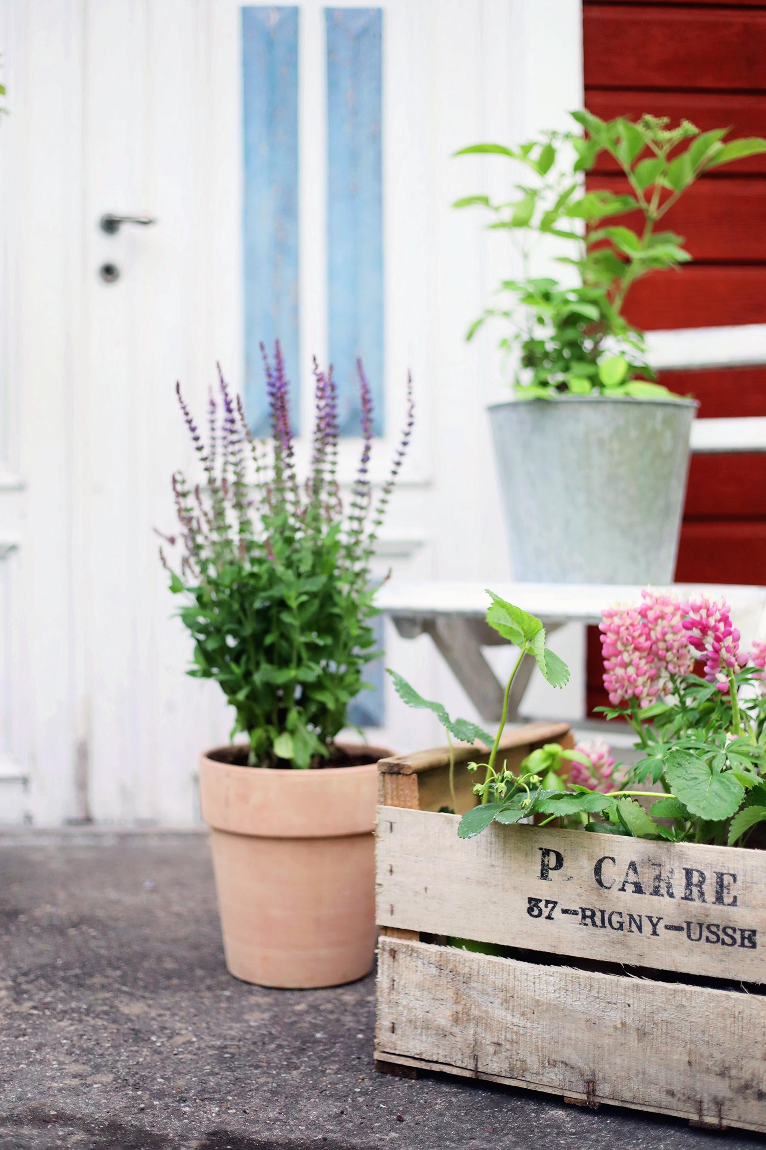 blomsterlandet gotland torp krukor odla växter trädgård barn trappa trälåda