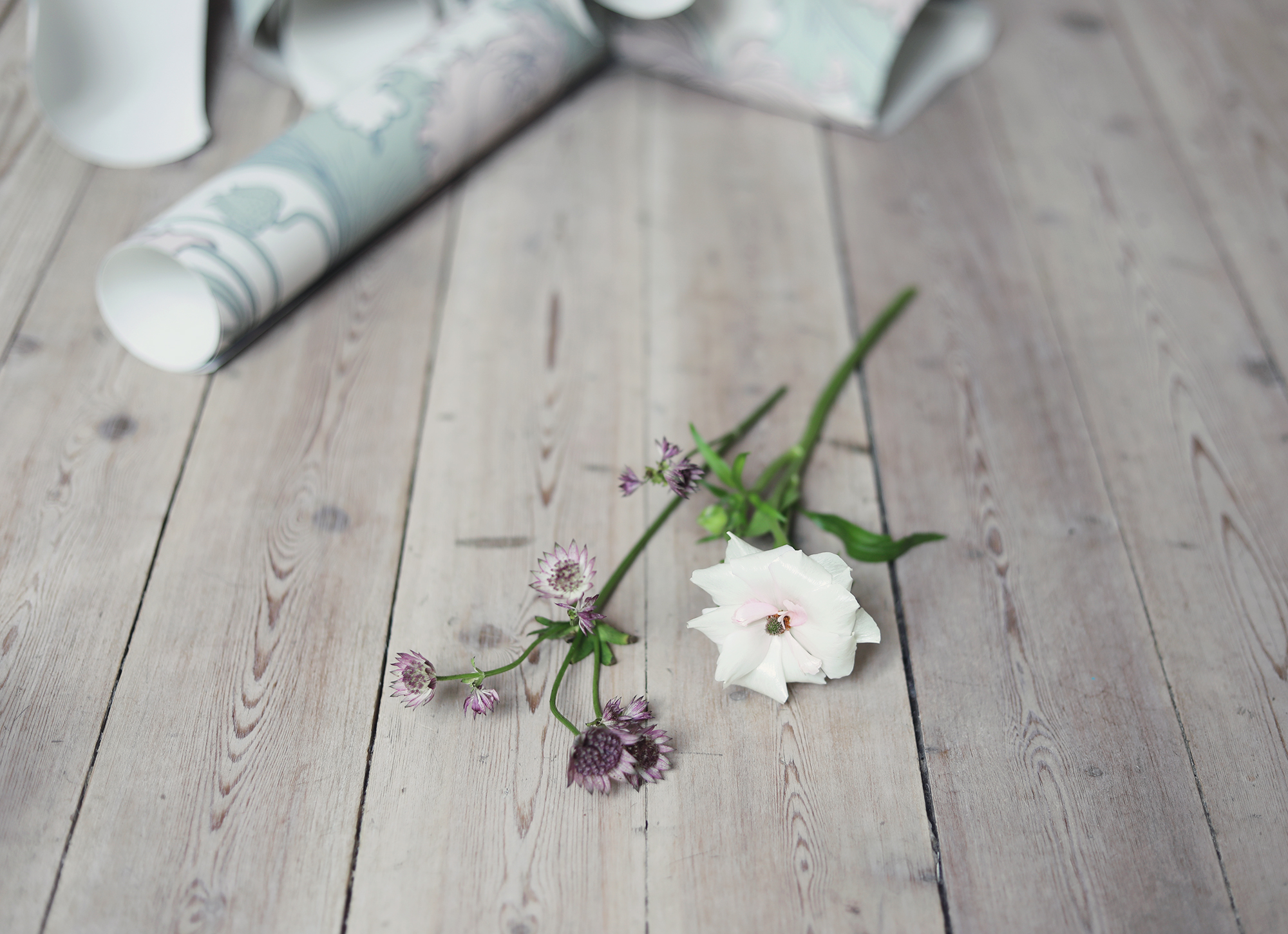 boråstapeter tapet tapeter inredning blommor sekelskifte jugend anno siri
