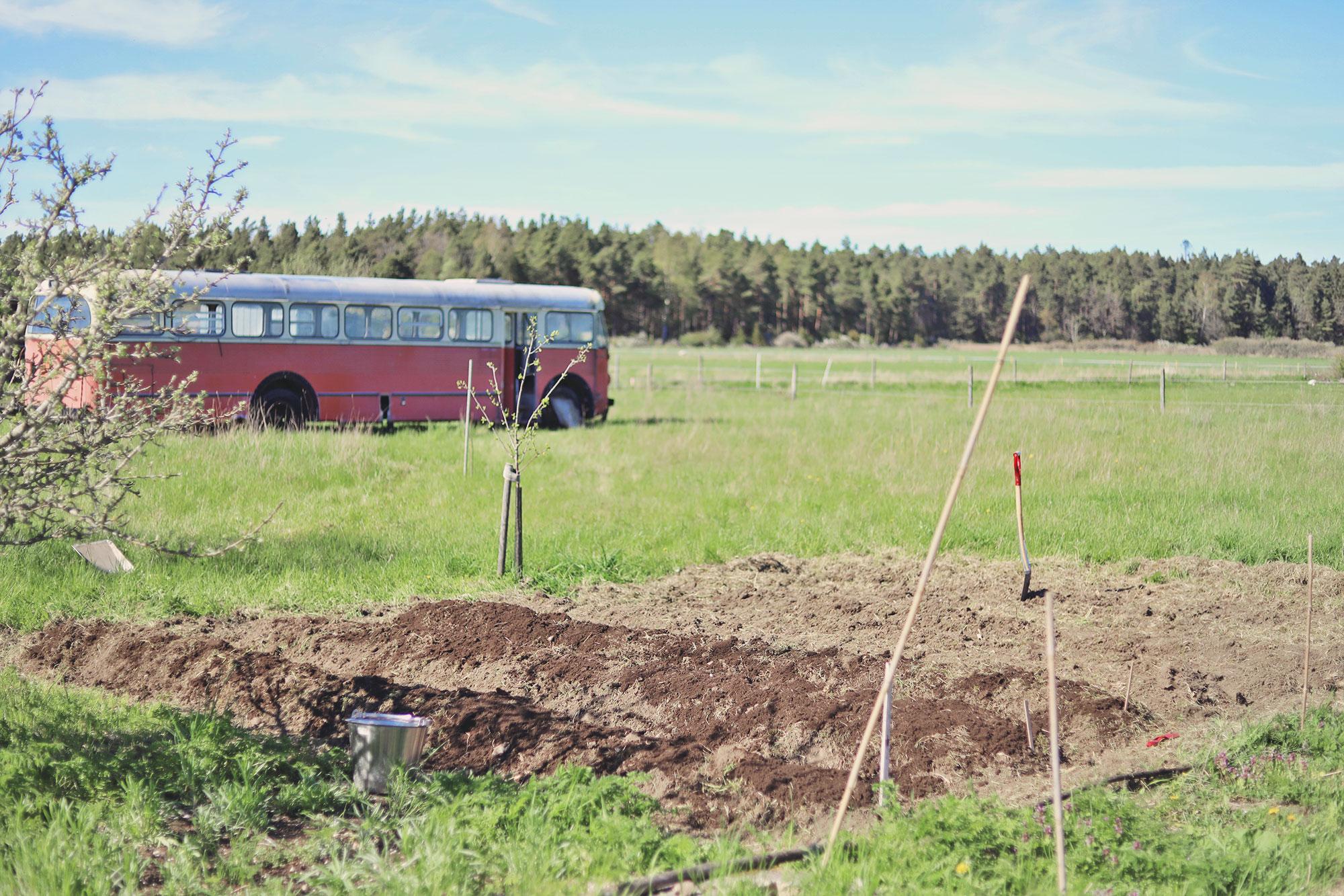 Gotland torp trädgård emmasvintage rosa buss trädgårdsland