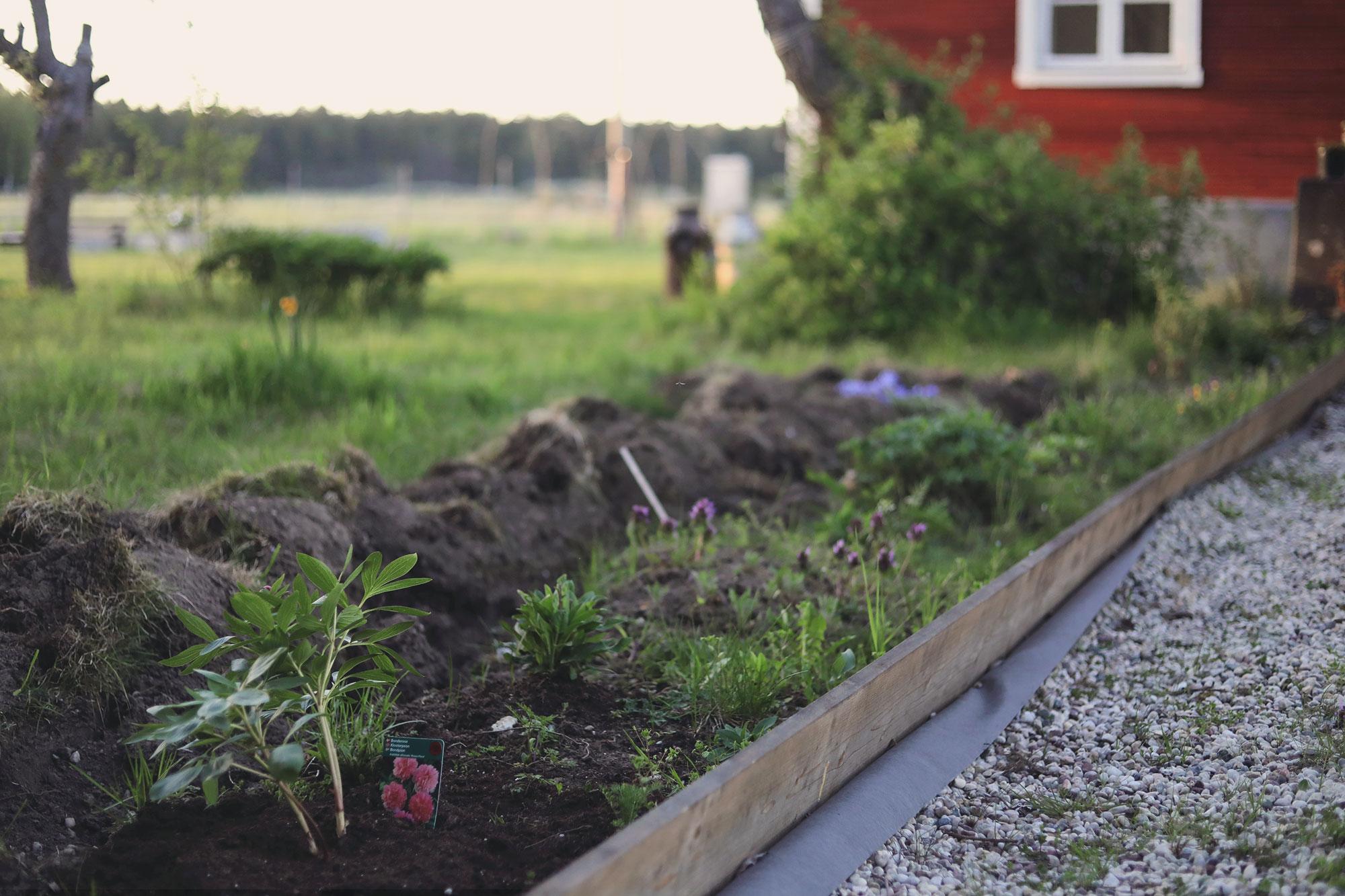 perennrabatt perenner trädgård torp skiss grusgång
